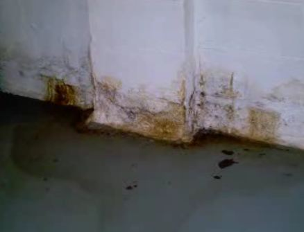 Basement Mold The Most Common Place In The Home